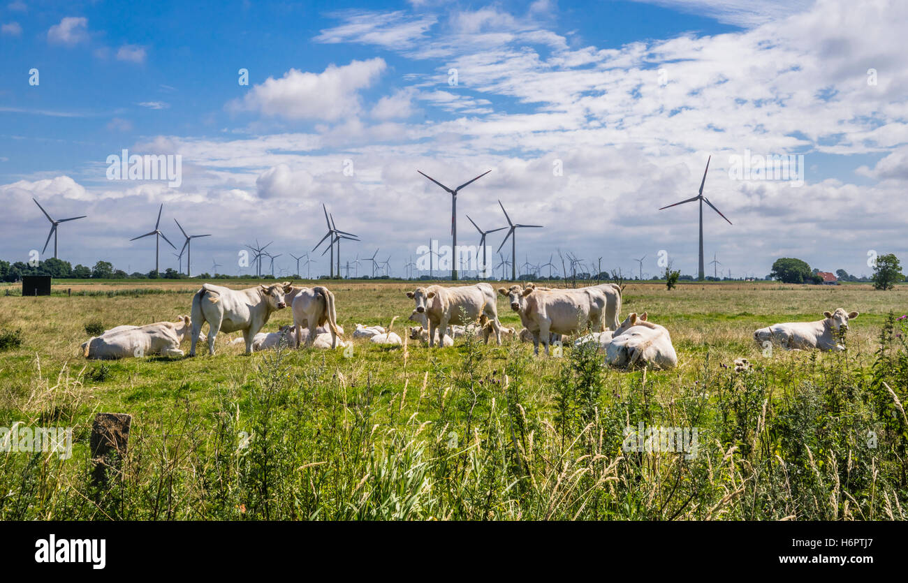 Germany, Schleswig-Holstein, the flat landscape of Dithmarschen with wind turbines and cattle - Stock Image