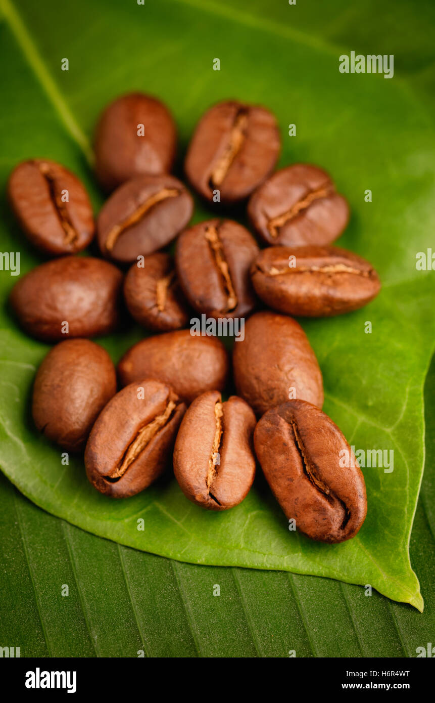 Fair trade organic coffee beans on a green leaf. - Stock Image