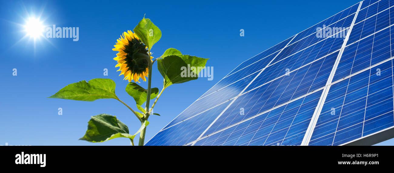 solar,energy,power,solar panel,sun,sunflower,light - Stock Image