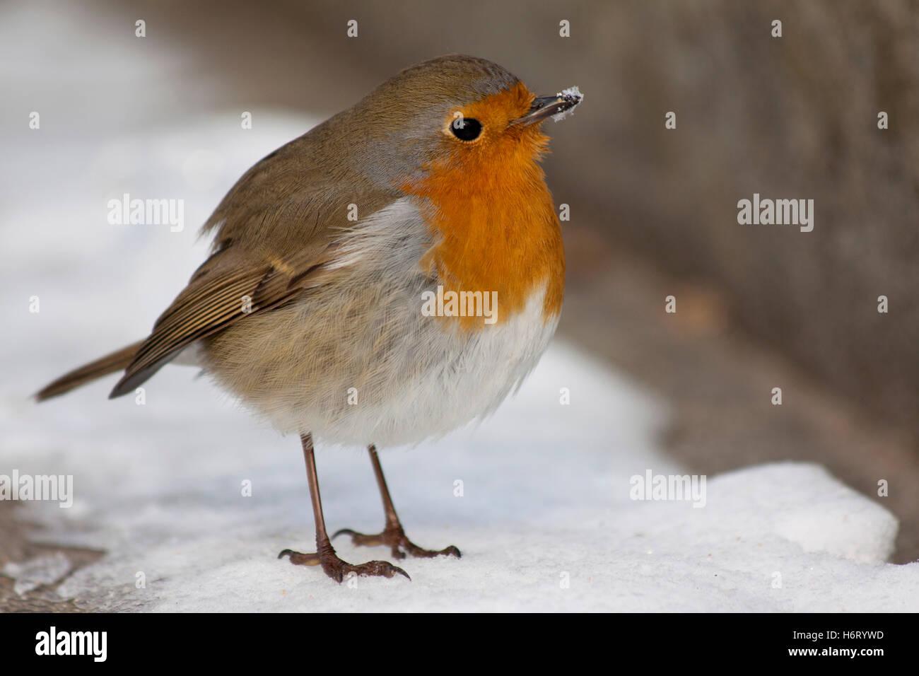 birds - Stock Image