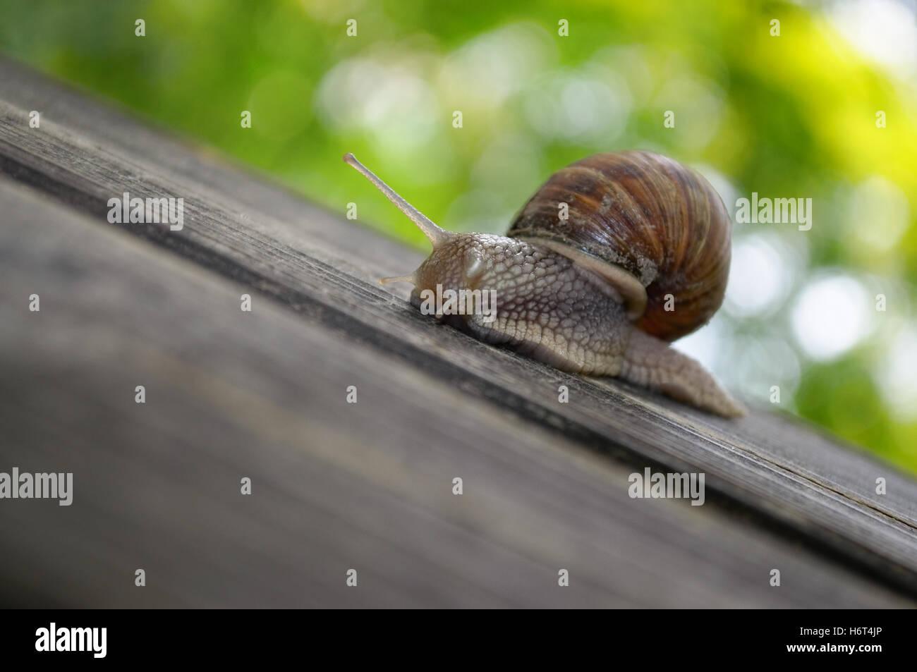 invertebrates - Stock Image