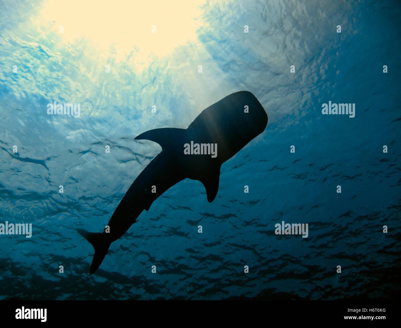 blue, shine, shines, bright, lucent, light, serene, luminous, life, exist, - Stock Image