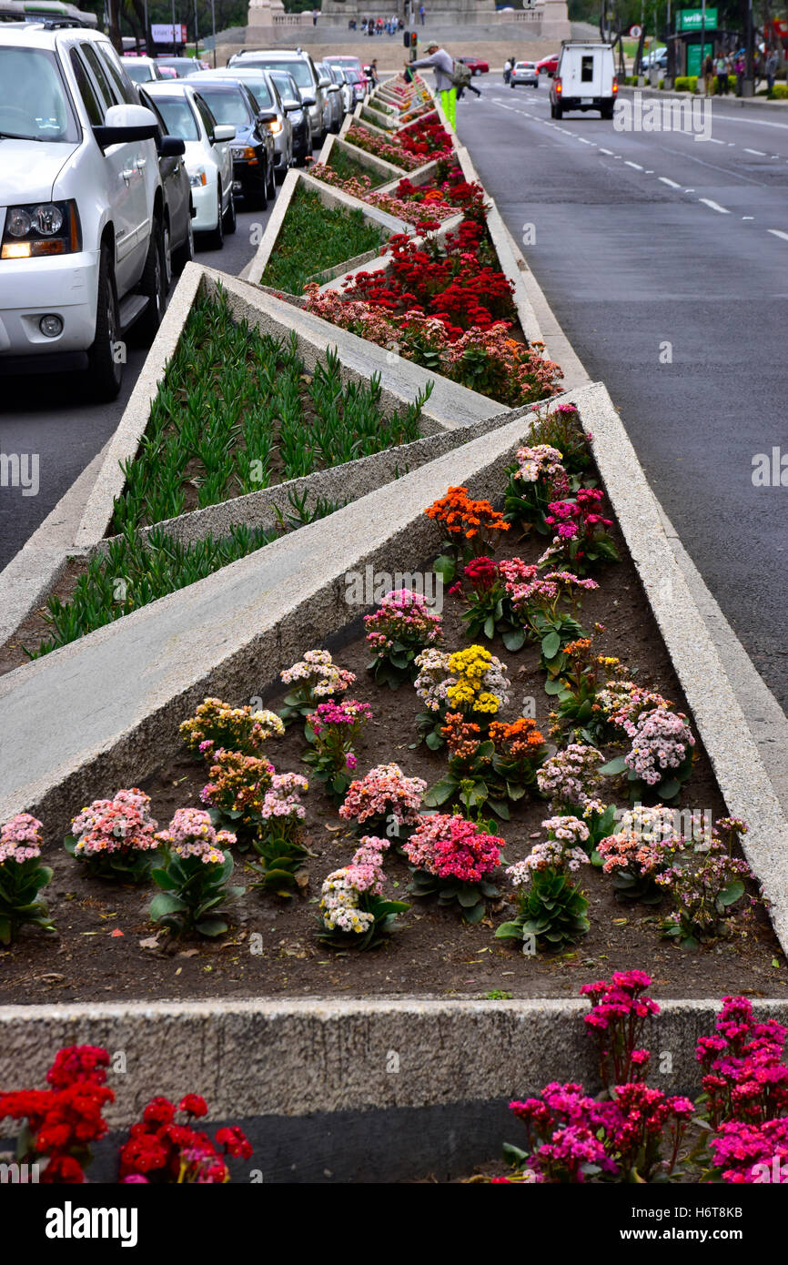 Divider median planted with plants in Mexico City, Mexico - Stock Image