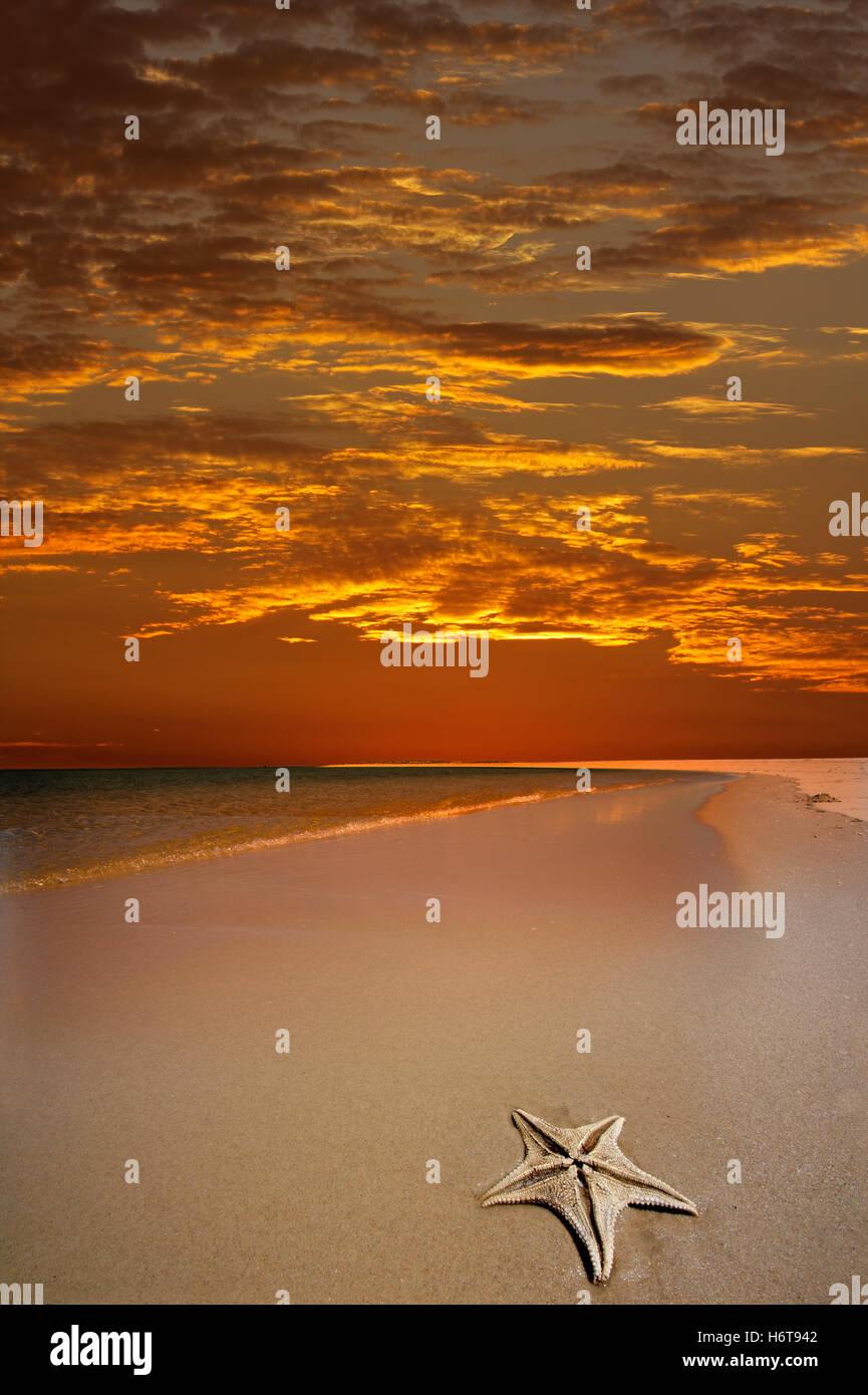 shine, shines, bright, lucent, light, serene, luminous, horizon, holiday, - Stock Image