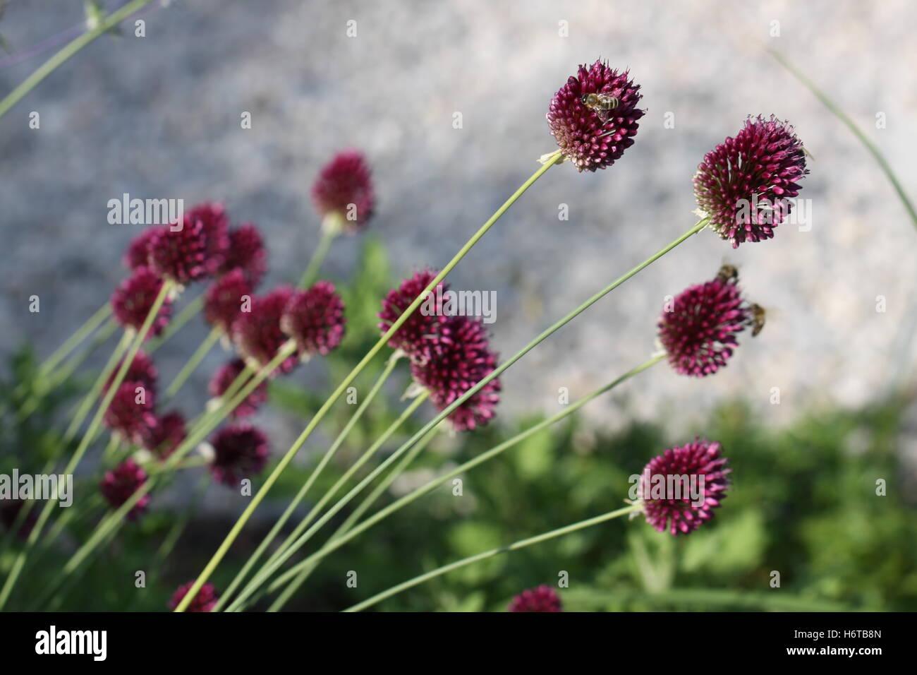 plants flowers Stock Photo