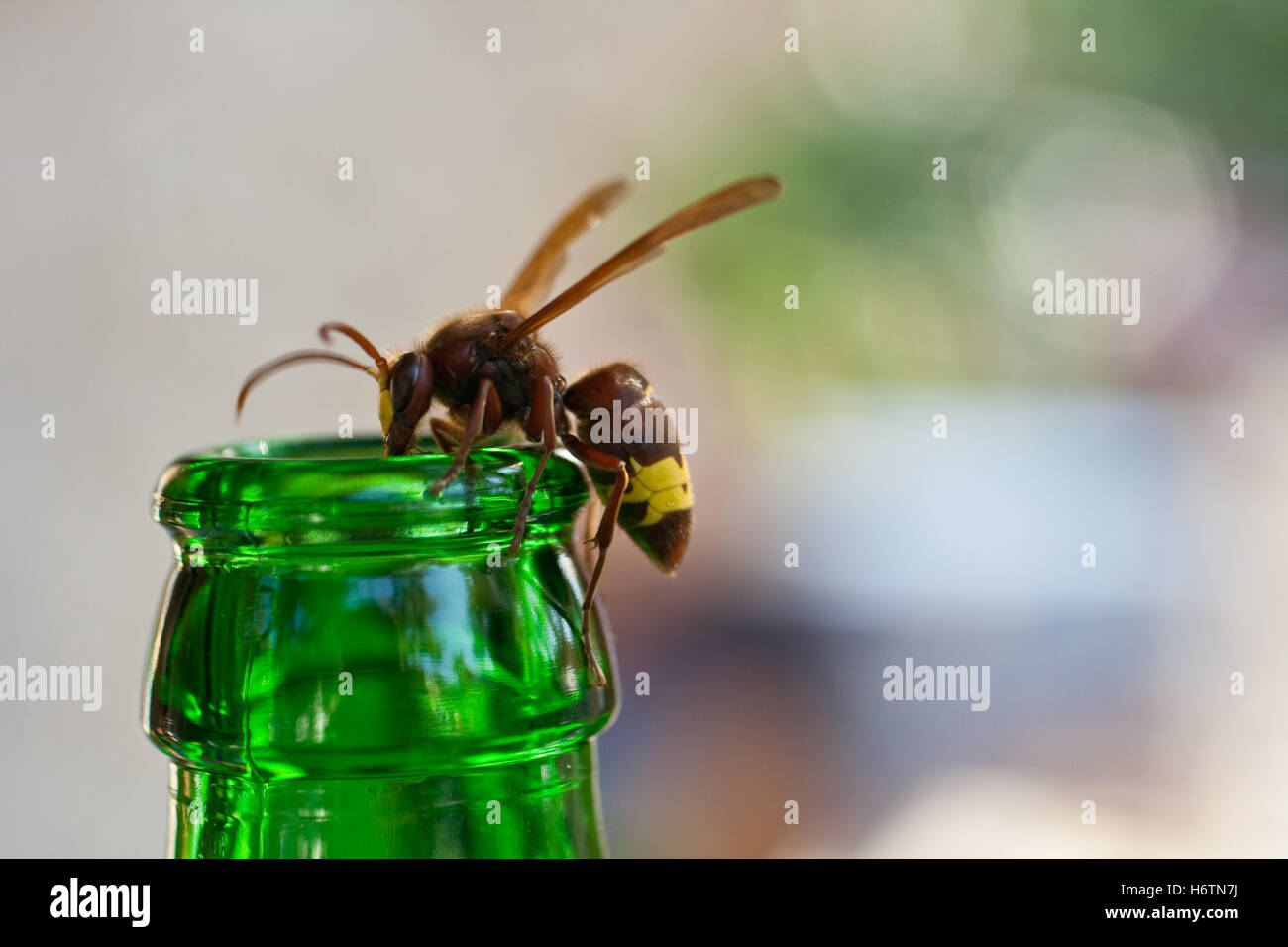 insects spiders - Stock Image