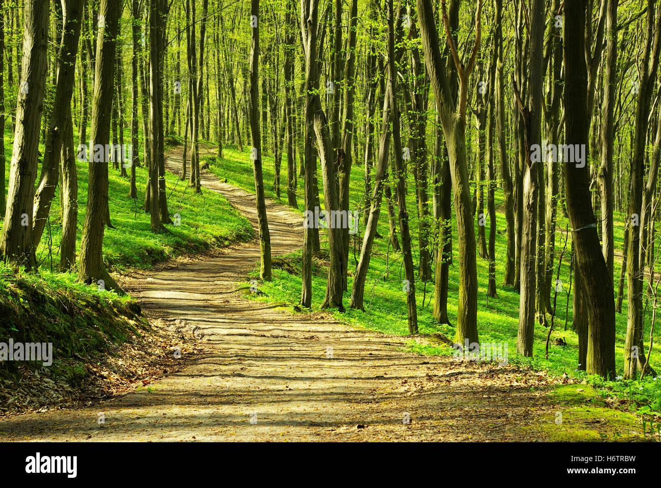 tree trees sunlight spring bouncing bounces hop skipping frisks jumping jump woods spiritual plants divine wilderness - Stock Image