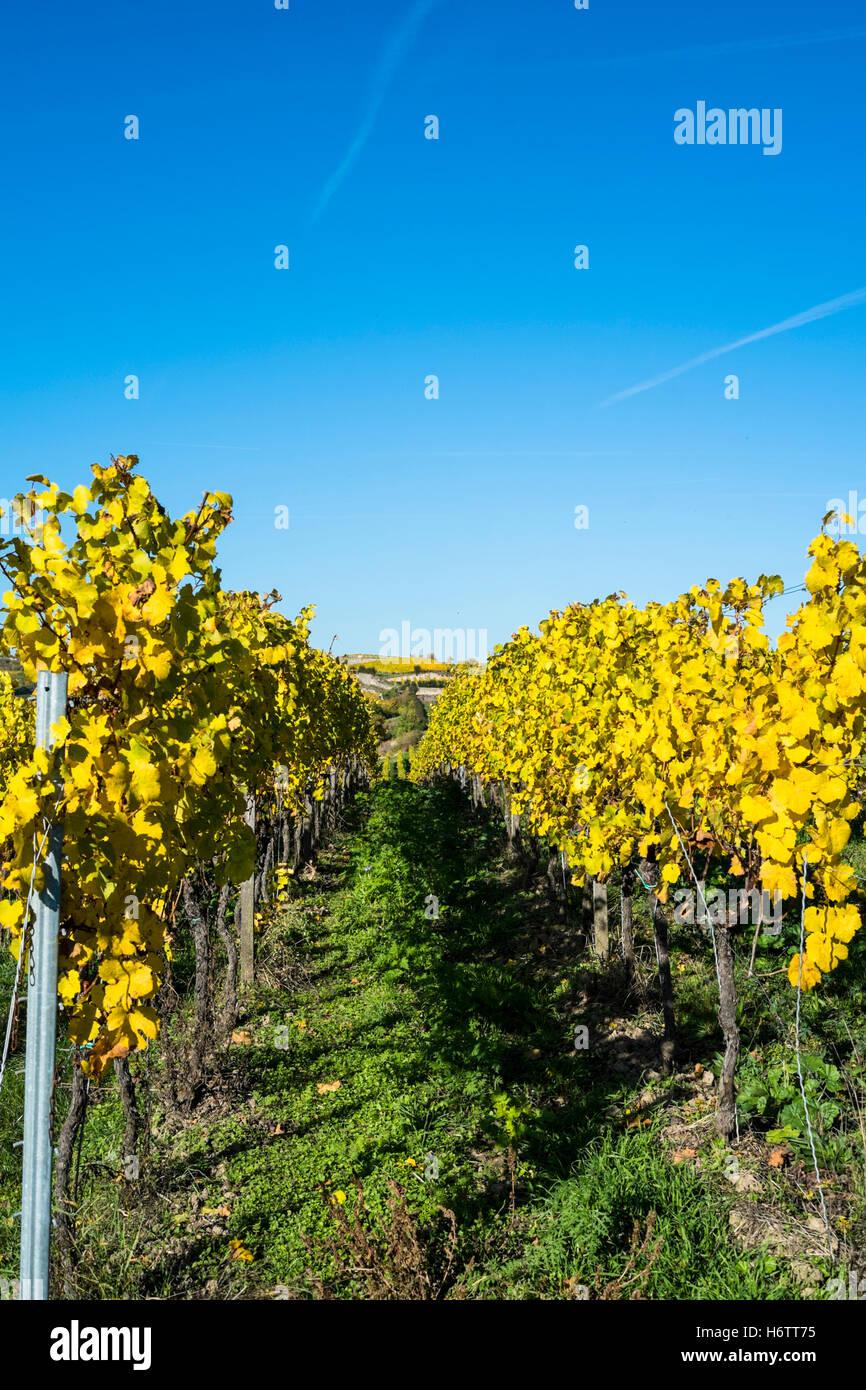 Vineyards in autumn, Pfalz region, Germany Stock Photo