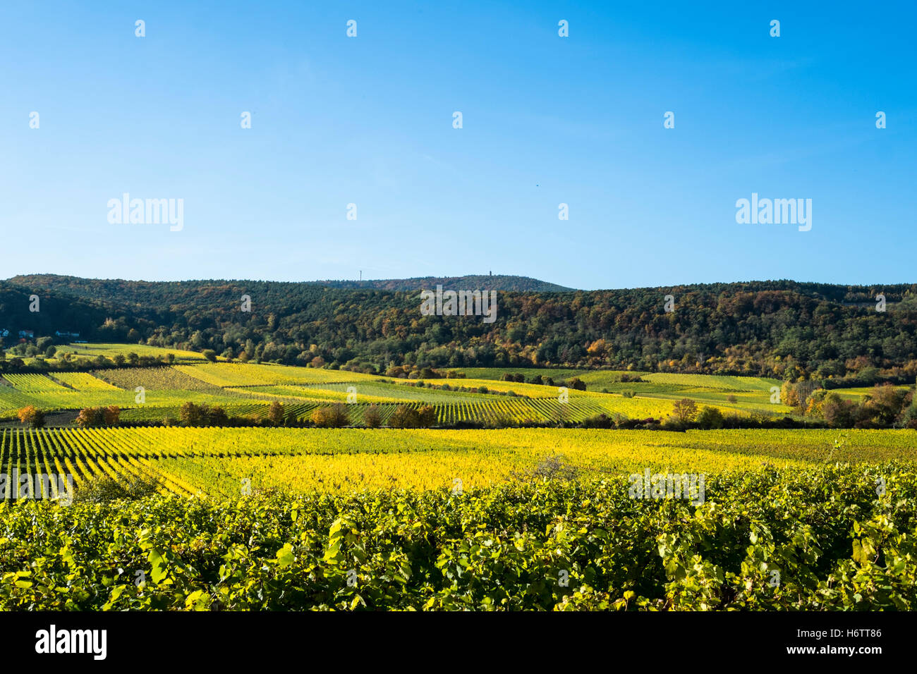 Vineyards in autumn, Pfalz region, Germany Stock Photo