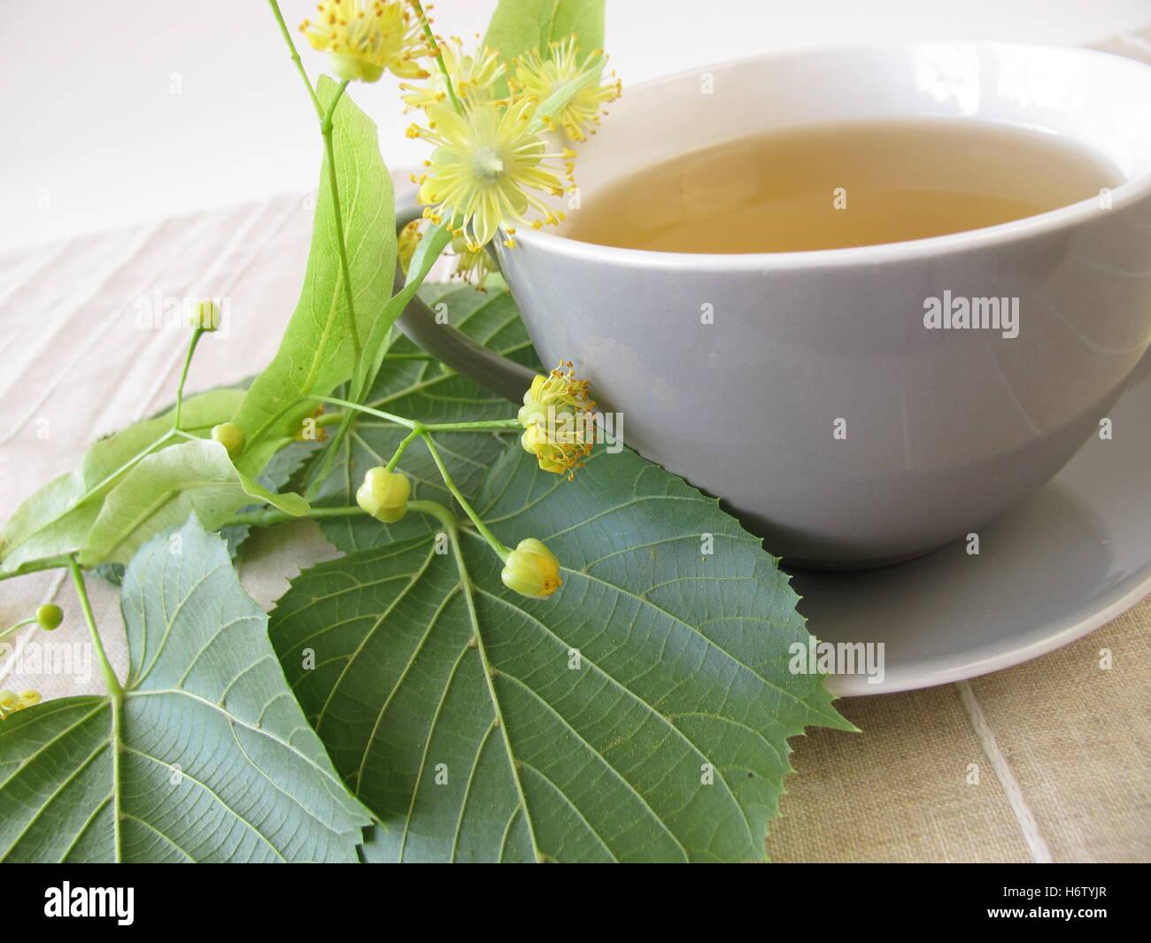 lime blossom tea Stock Photo