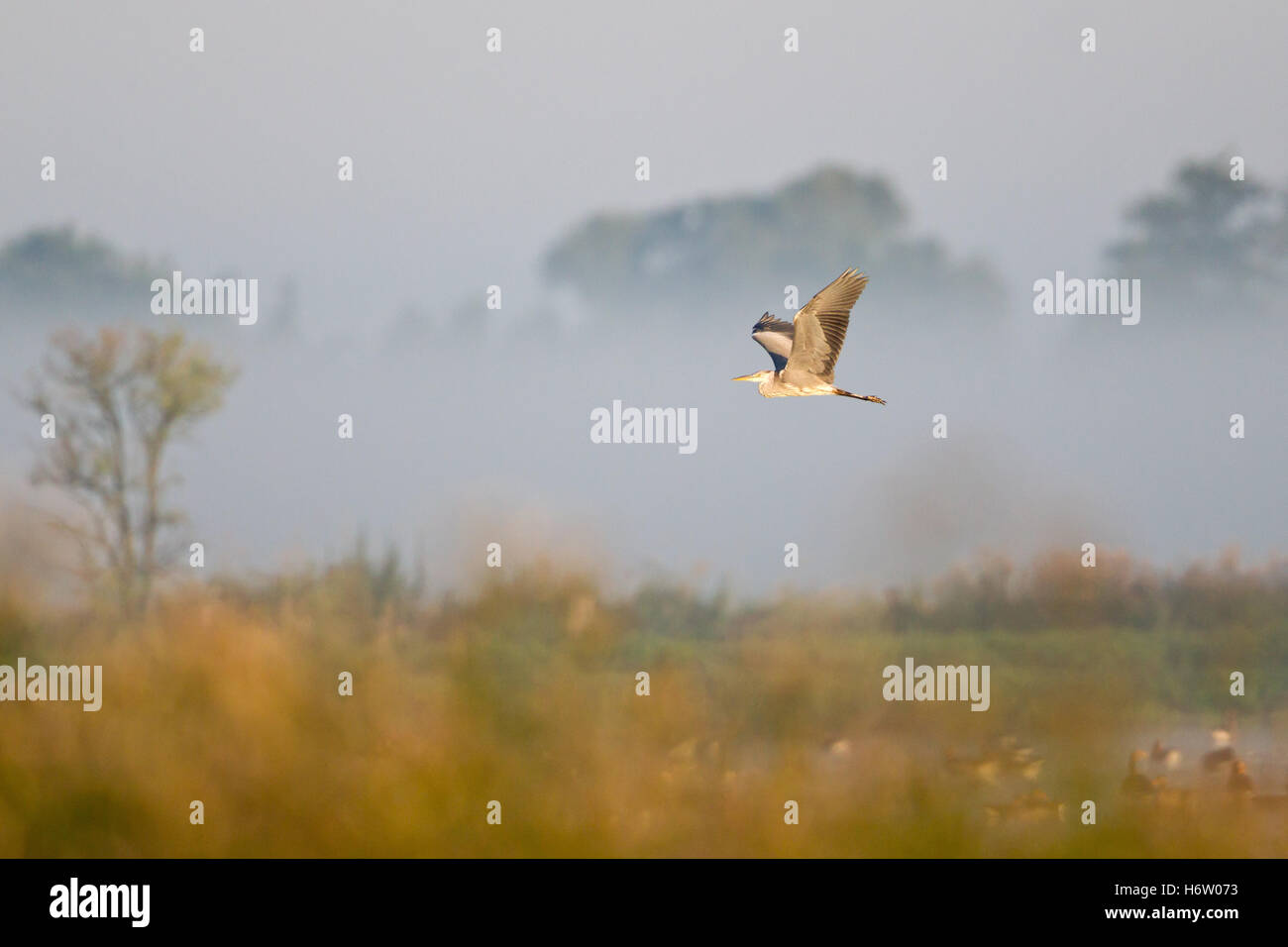birds - Stock Image