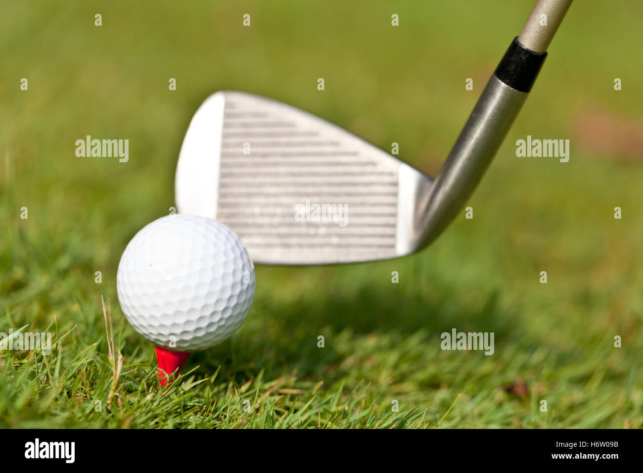 golf ball and golf club tee closeup on green lawn - Stock Image