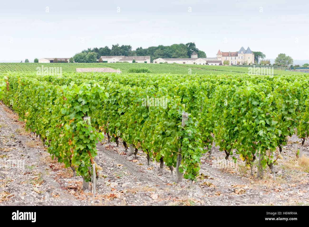arrangement travel agriculture farming europe vineyard france outside style of construction architecture architectural Stock Photo