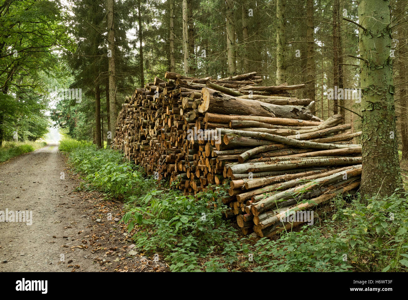 Pile of cutted wood in the forest for firewood - Stock Image