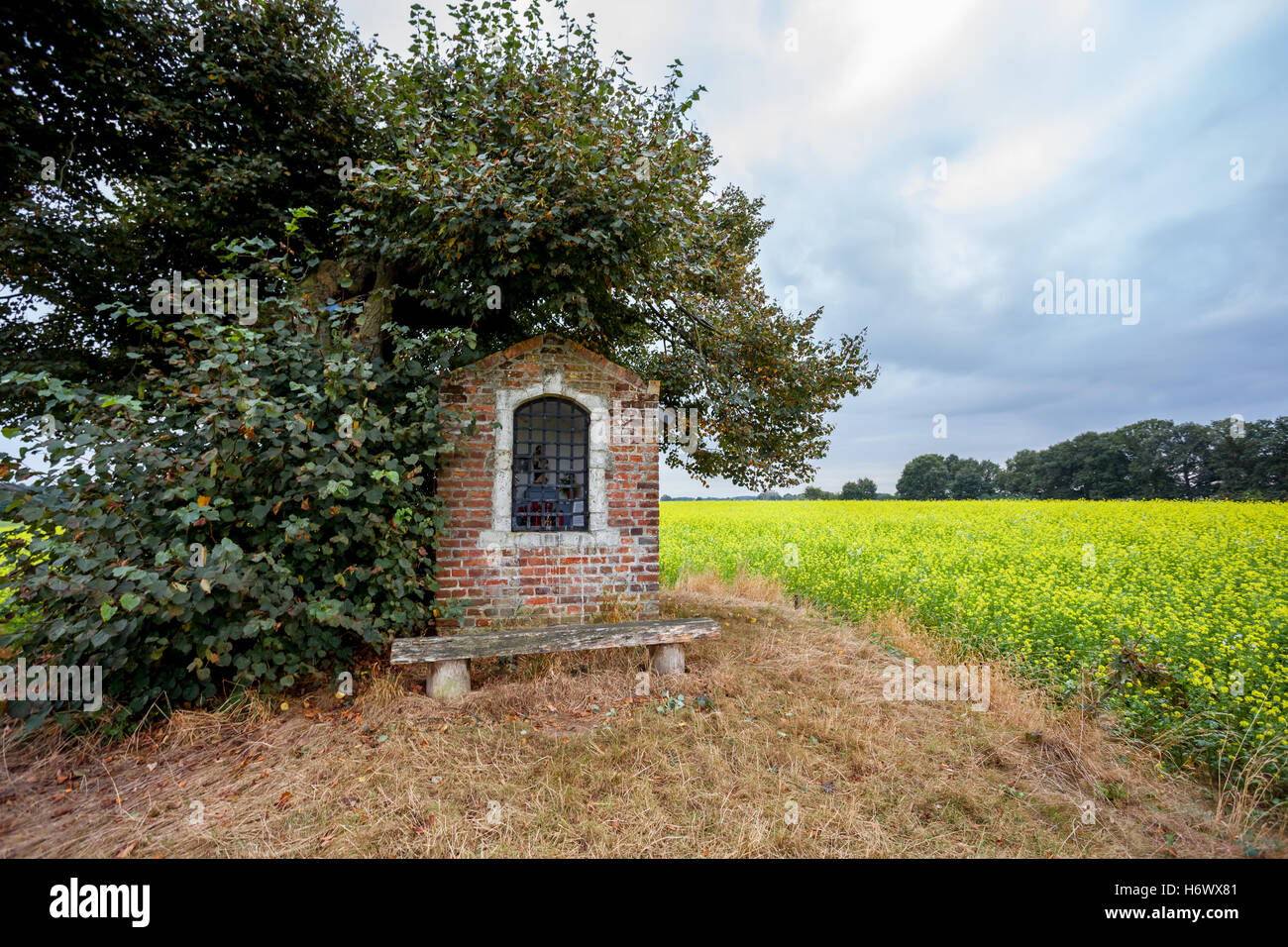 on land with yellow flowers, there is a small chapel - Stock Image