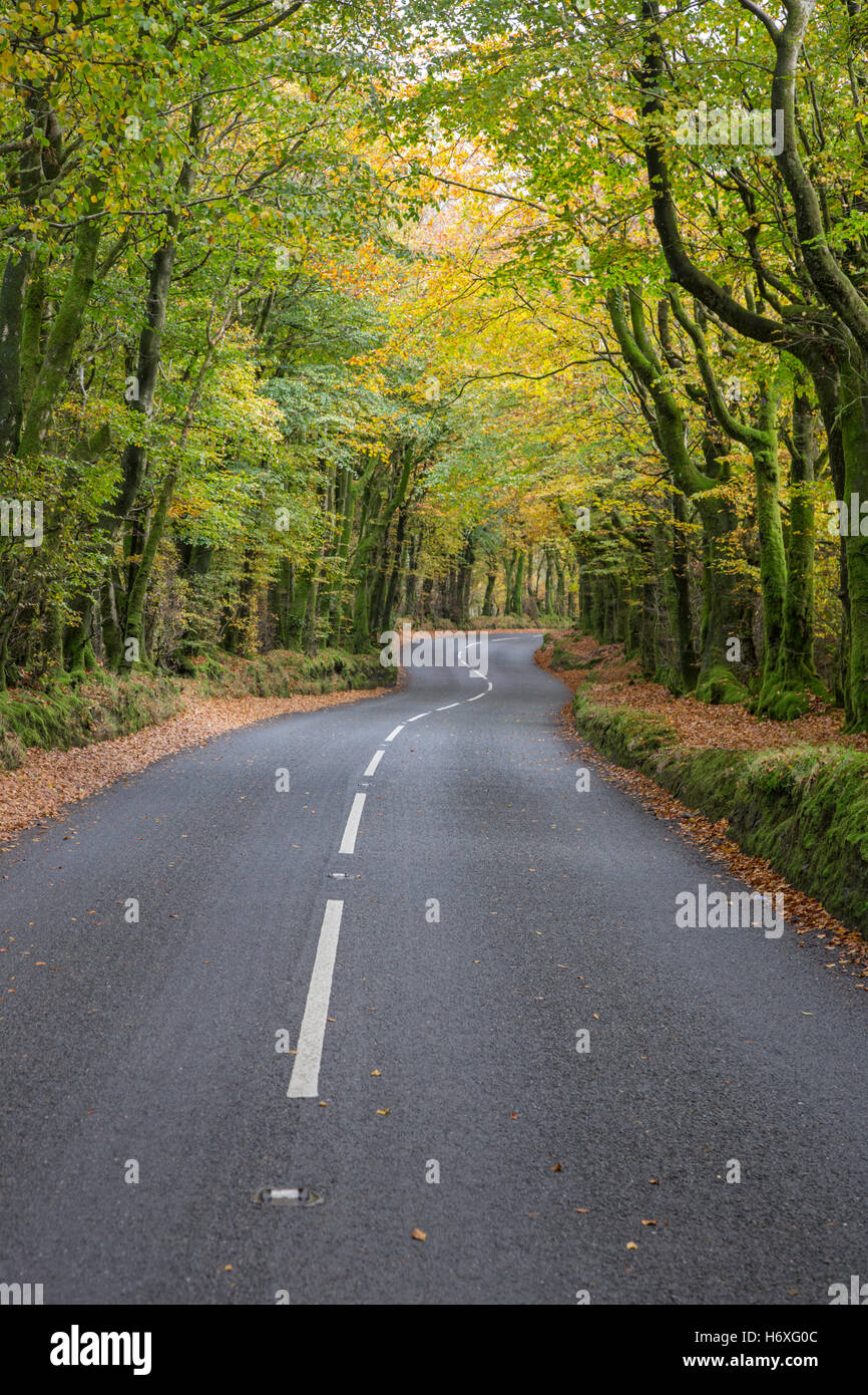 A country road in autumn. England, UK - Stock Image