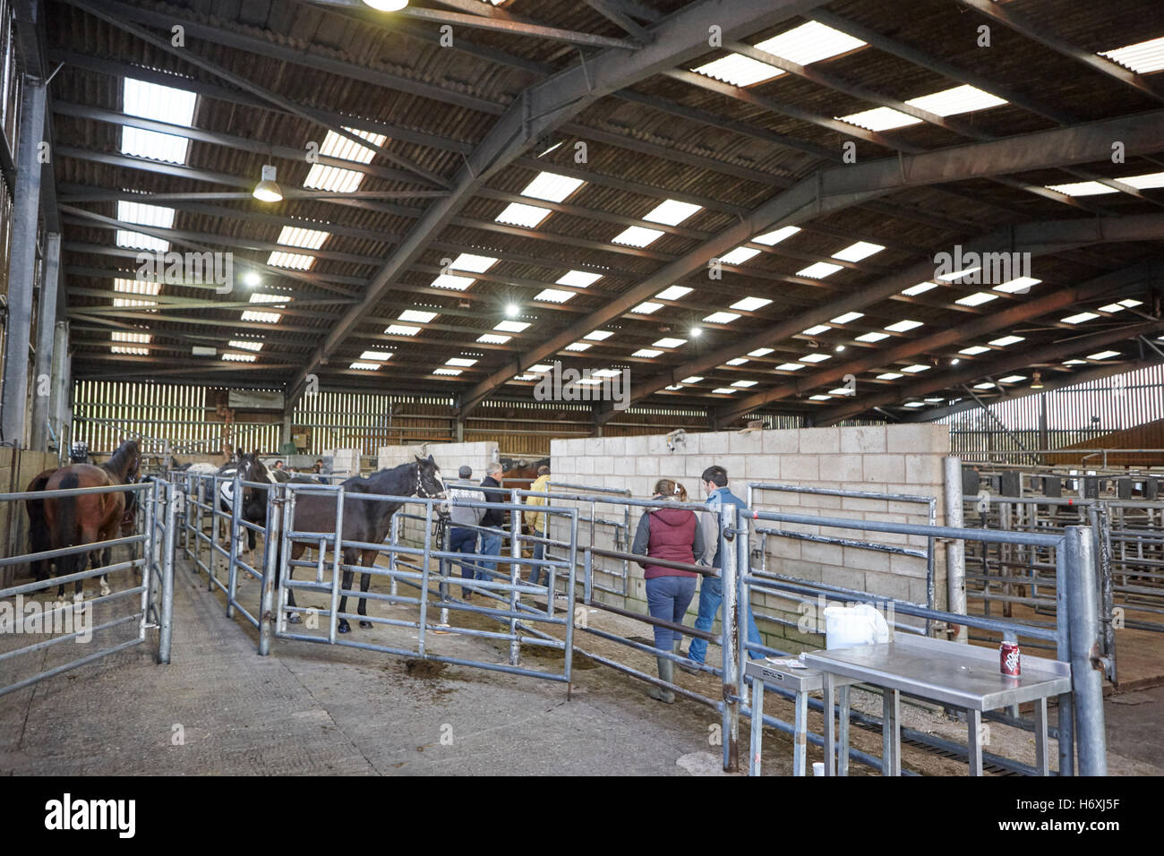 horse and livestock auction barn beeston castle england uk - Stock Image