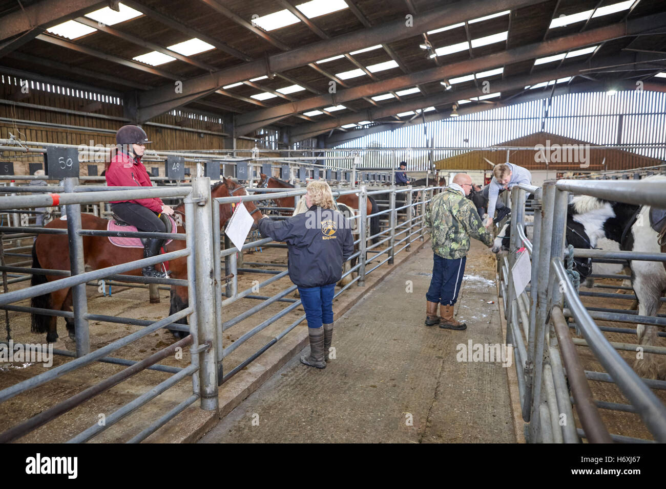 horses to be sold at horse and livestock auction barn