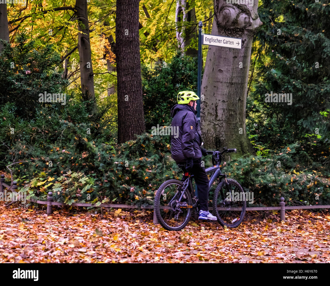 Berlin Tiergarten park. Senior male cyclist on bicycle and golden autumn leaves on ground and Autumnal trees Stock Photo