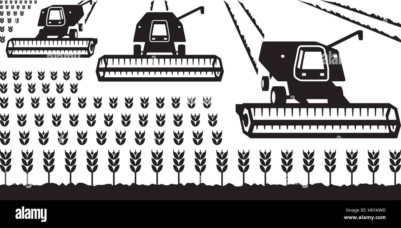 Combine harvesters gathering wheat - vector illustrator - Stock Vector
