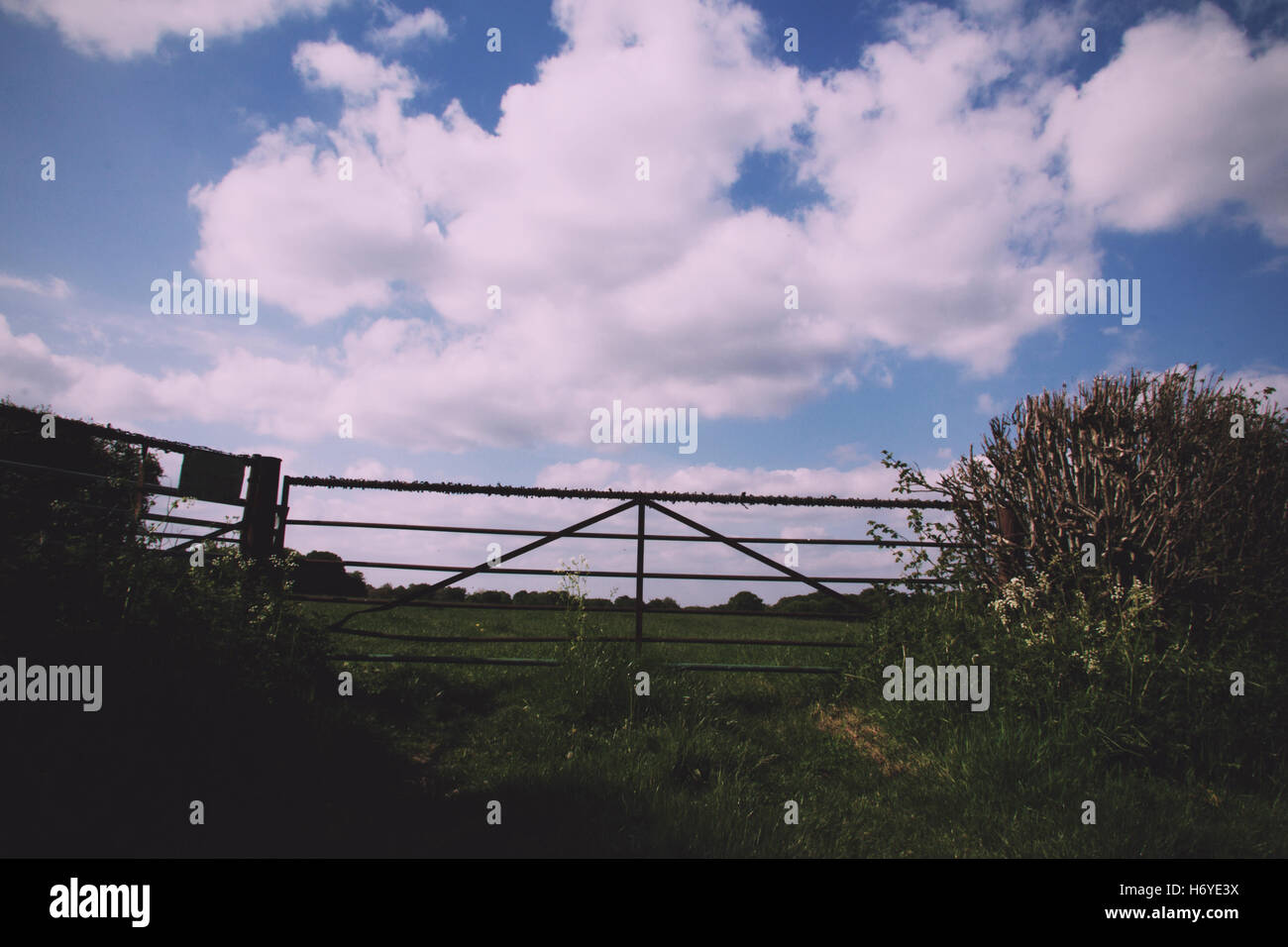 Old metal gate in a hedge with blue sky Vintage Retro Filter. - Stock Image