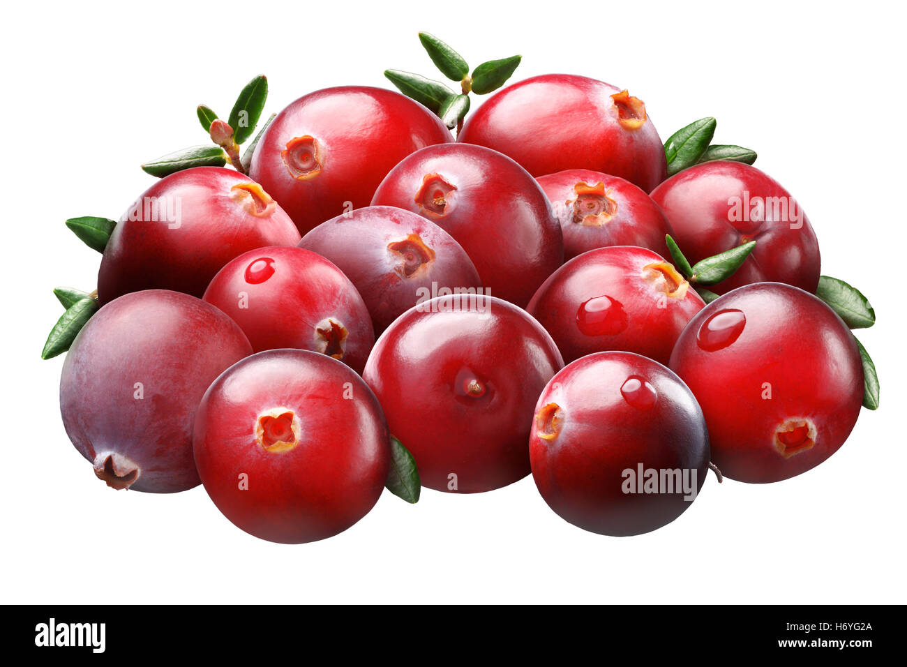 Pile of cranberries (Vaccinium oxycoccus) with leaves, superpositioned, light brushed, shadowless. Clipping paths - Stock Image