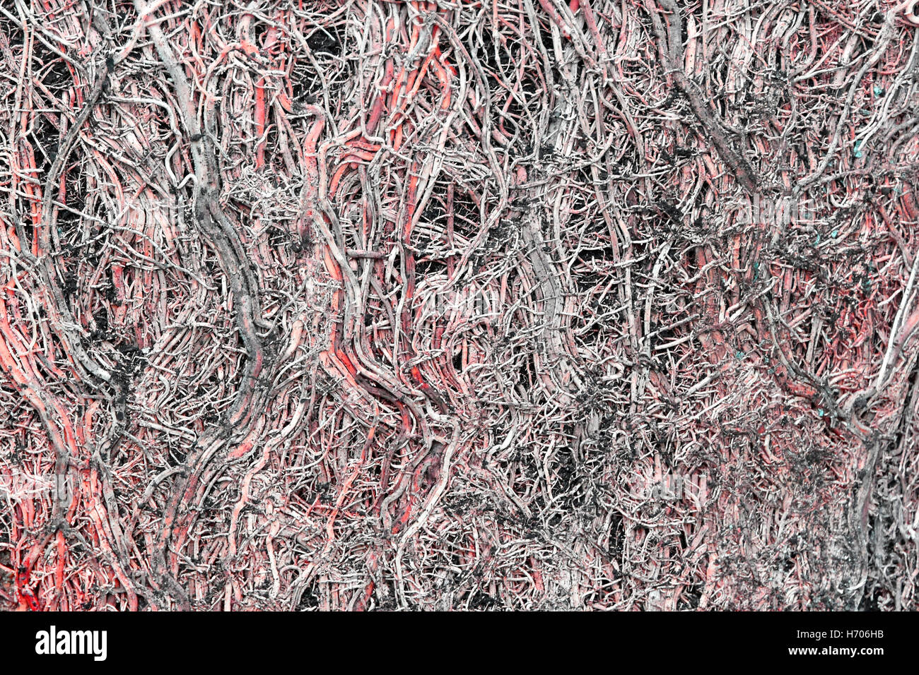 Abstract close up image of tight cluster of roots of a pot bound Bamboo plant after pot removal concept idea of - Stock Image