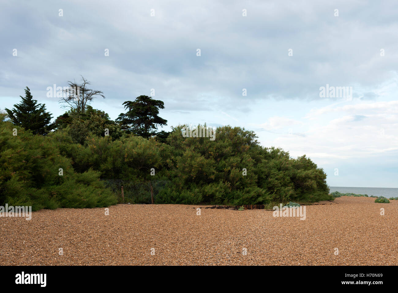 Undergrowth on the edge of a beach, Bawdsey Ferry, Suffolk, UK. Stock Photo