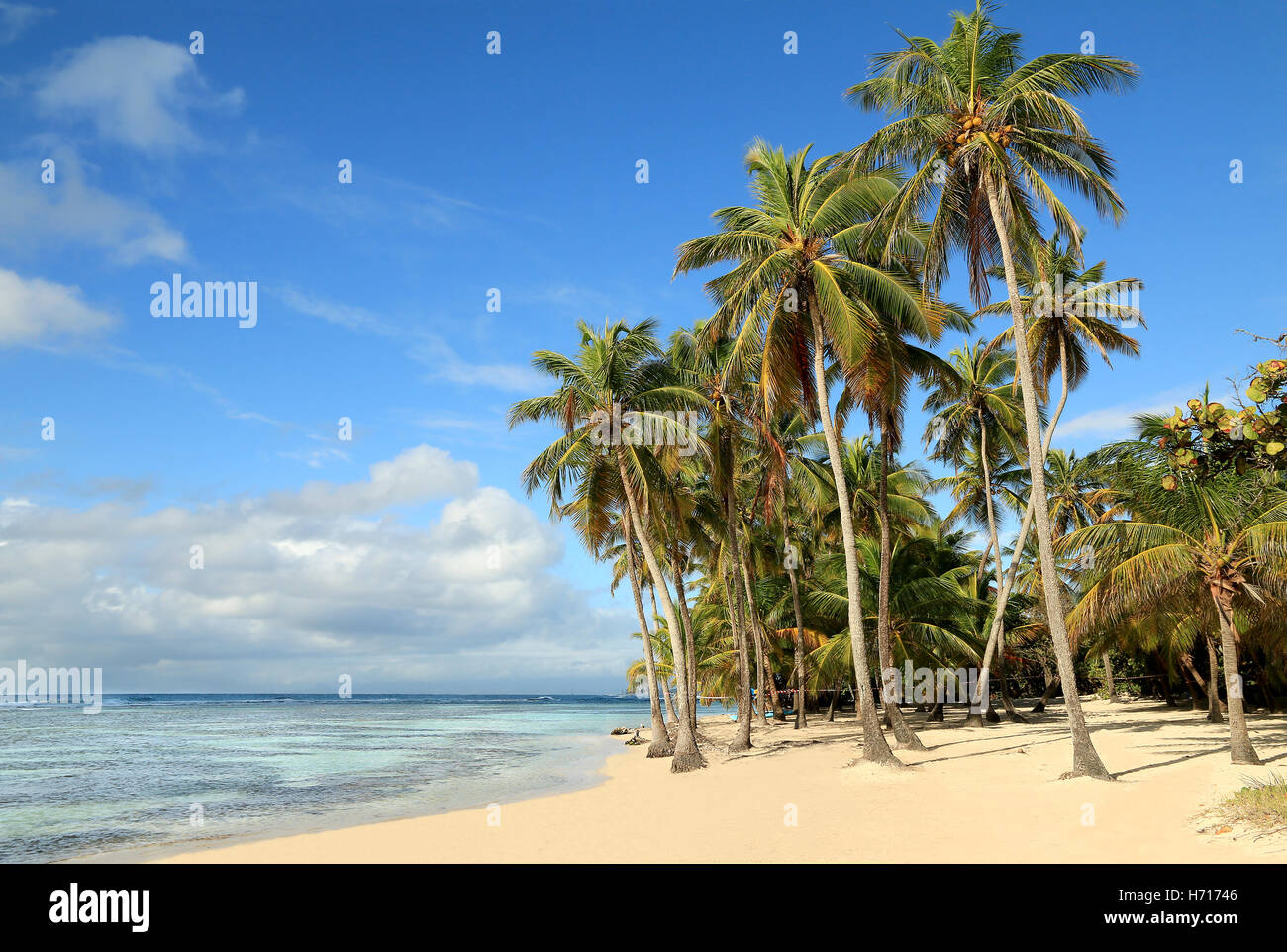 Beautiful white sand beach in Guadeloupe (France), Caribbean Islands - Stock Image
