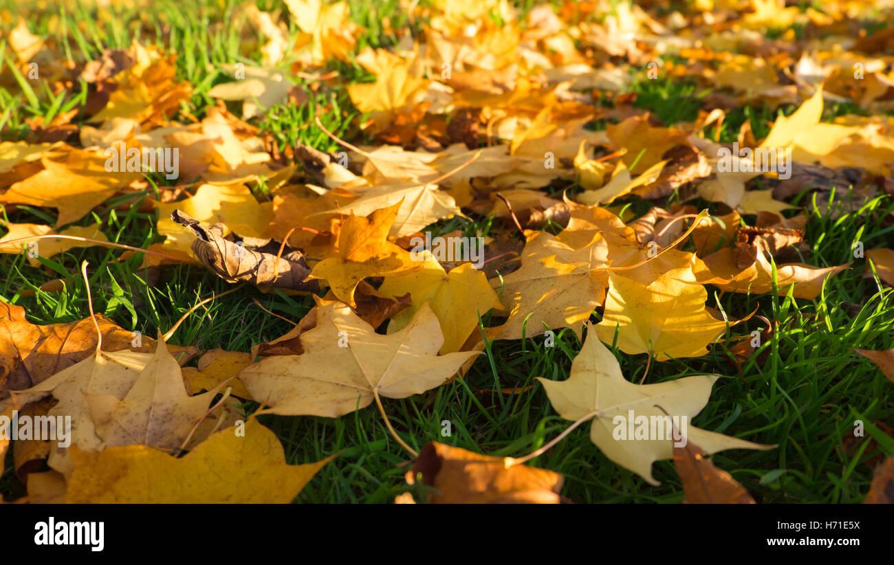 Autumn foliage at Roundhay Park, Leeds Stock Photo