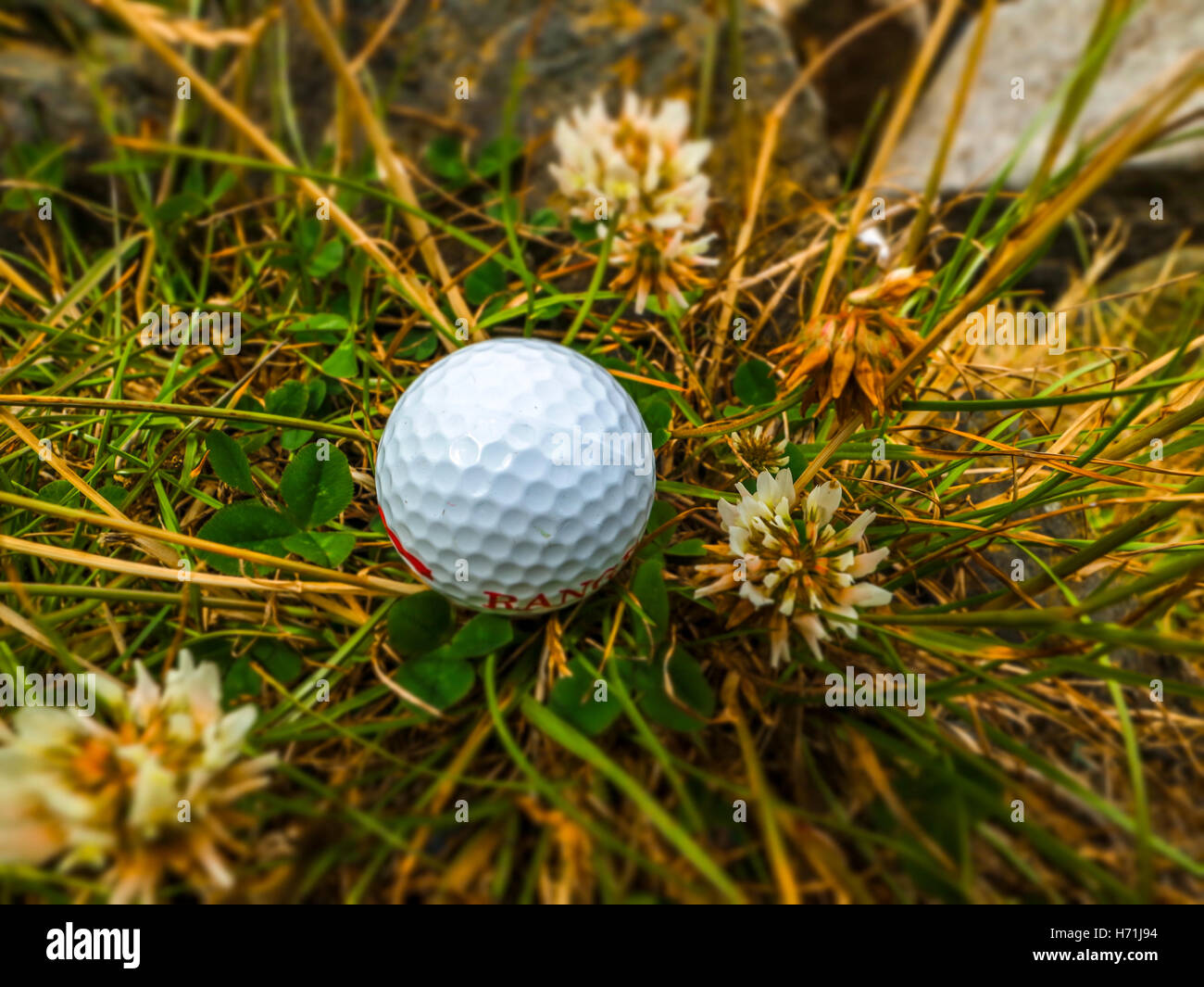 golf ball in the rough grass - Stock Image