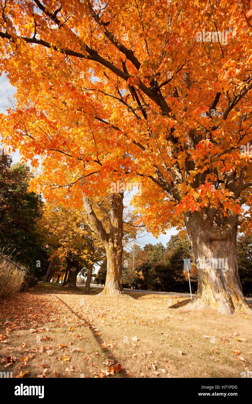 sun sunny beams rays sunrays sunbeam light bright tree branches leaves leaf autumn fall season colors colorful yellow - Stock Image