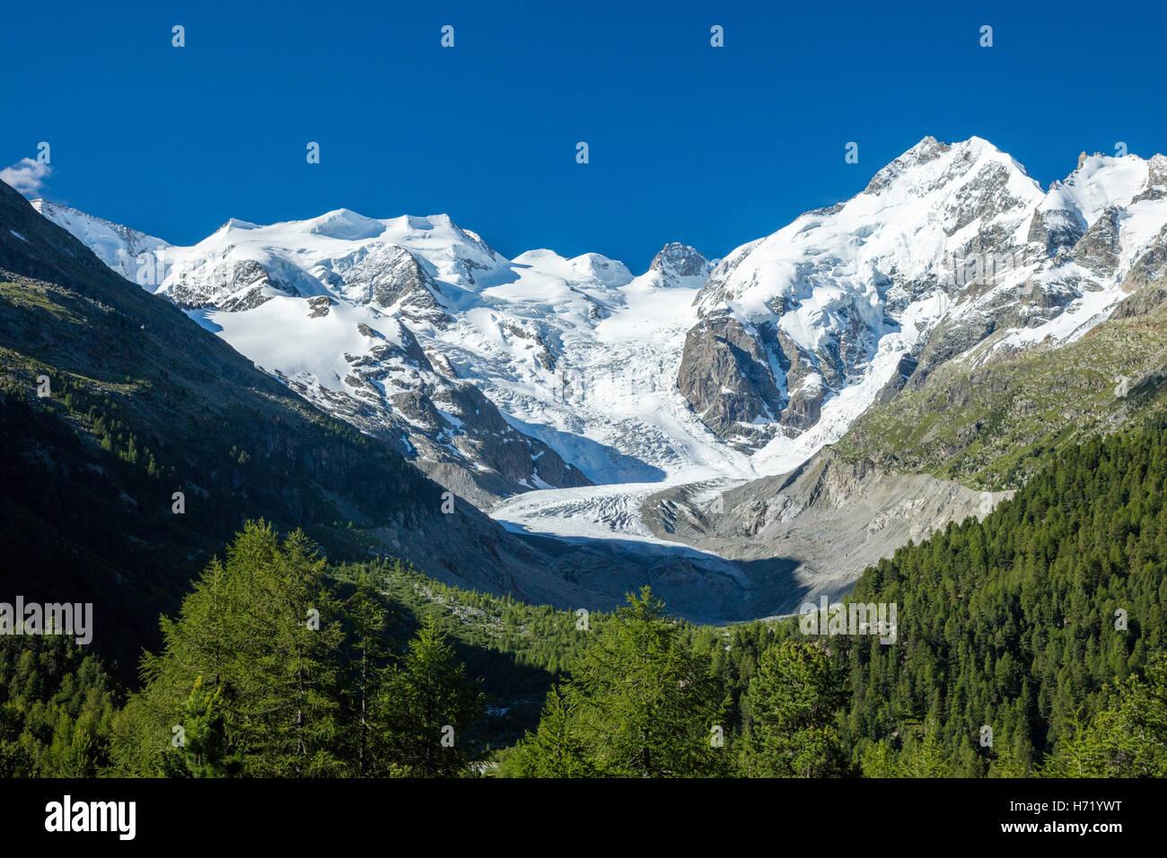 Piz Bernina and Morteratsch Glacier, Pontresina, near St Moritz, Berniner Alps, Graubunden, Switzerland. - Stock Image