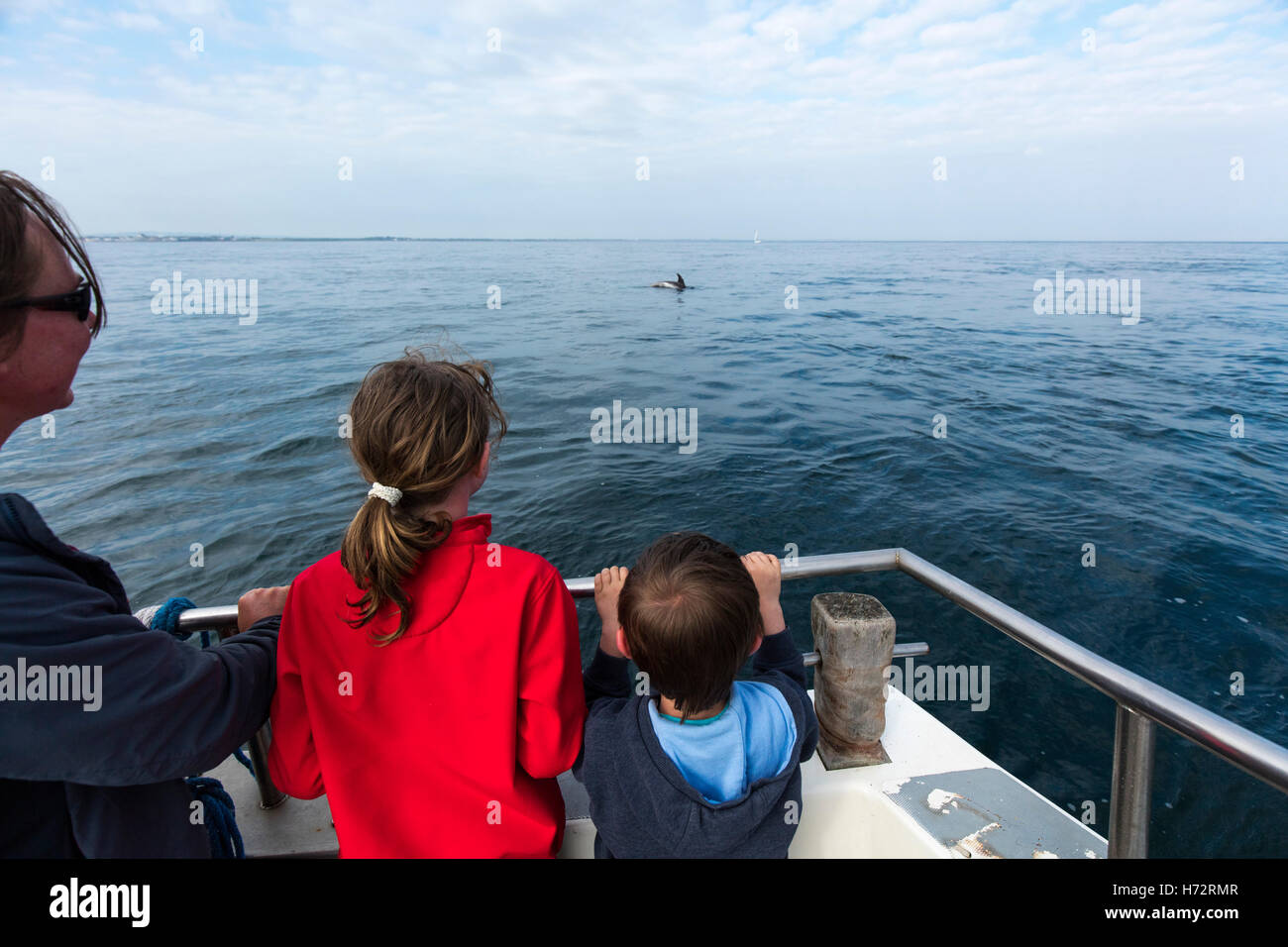 Dolphin watching near the Saltee Islands, County Wexford, Ireland. Stock Photo