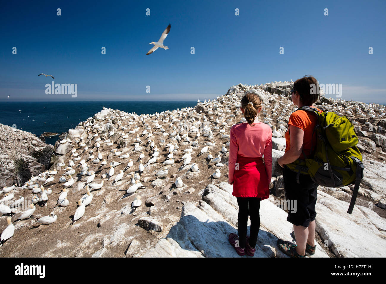 Visitors beside the gannet colony on Great Saltee Island. County Wexford, Ireland. - Stock Image