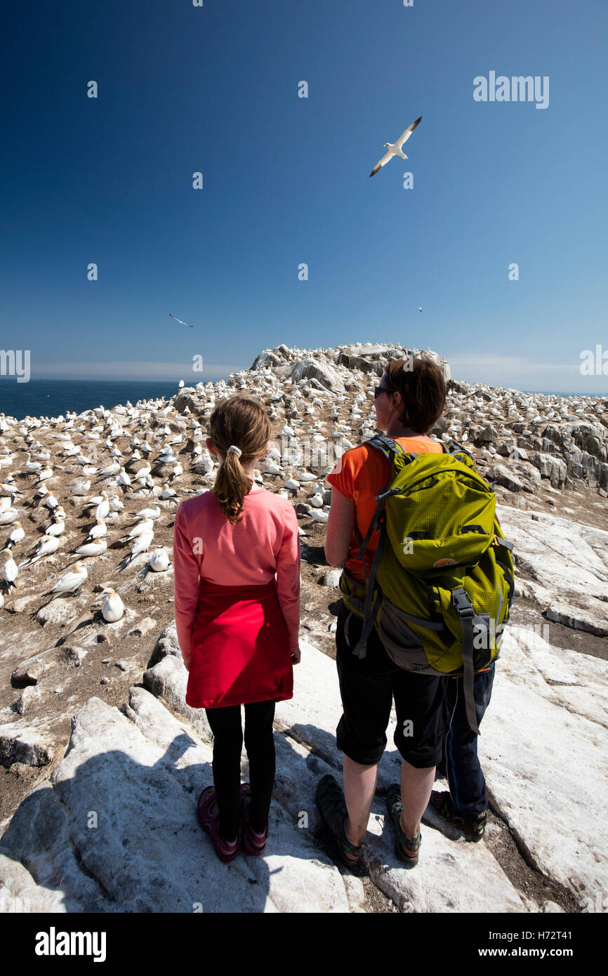 Visitors beside the gannet colony, Great Saltee Island, County Wexford, Ireland. - Stock Image