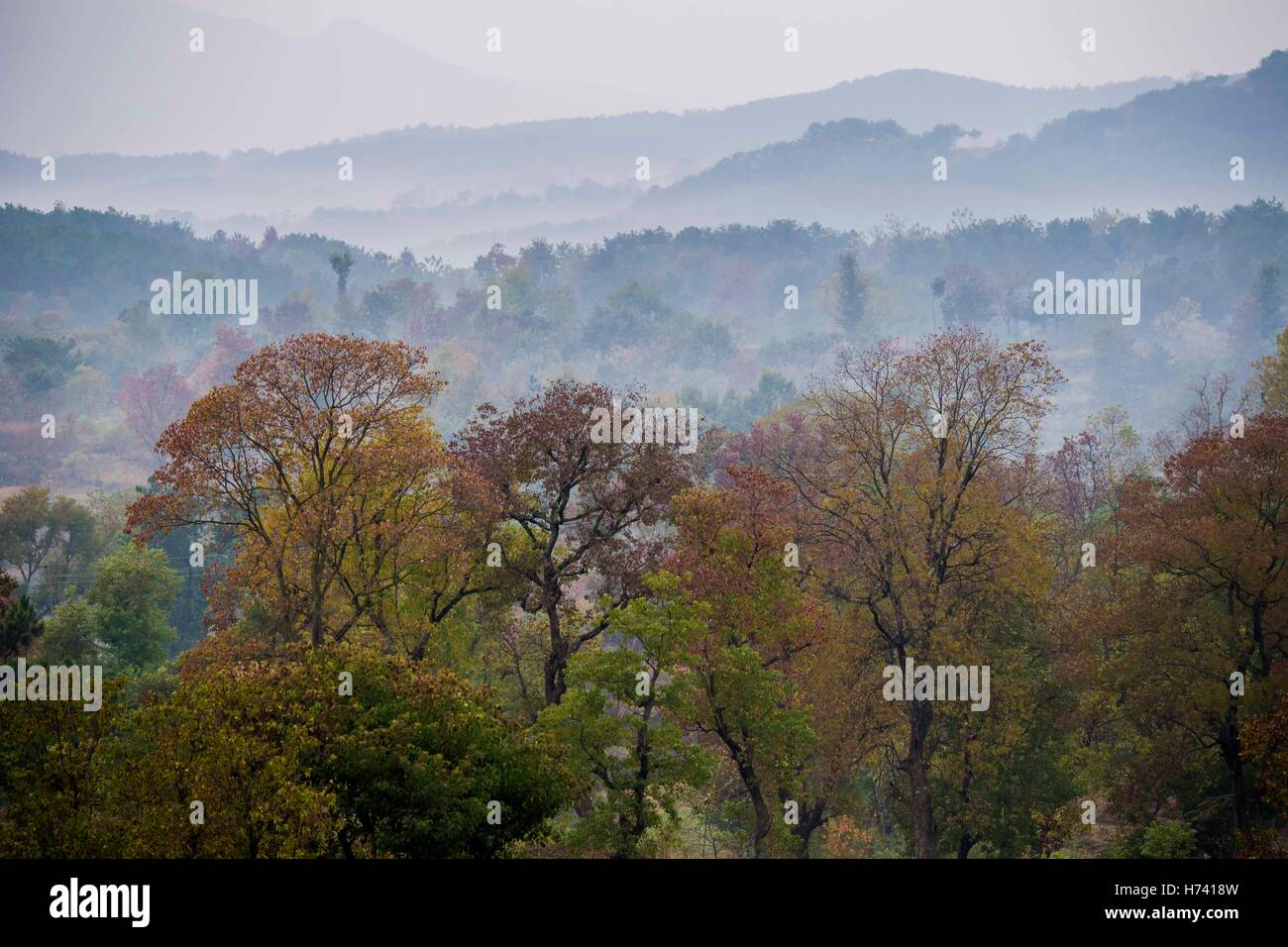Dawu. 2nd Nov, 2016. Photo taken on Nov. 2, 2016 shows Chinese tallow trees in Beishan Village of Dawu County, central - Stock Image