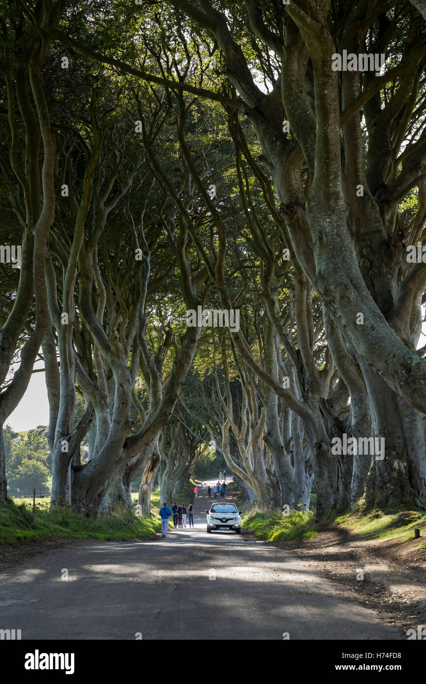 The dark hedges, Bregagh Rd, Ballymoney, Avenue of Beech trees used in game of thrones series, Antrim Ireland Stock Photo