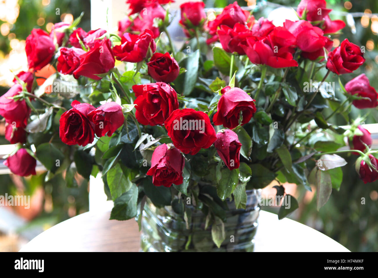Red Bright Beautiful Flowers Roses Thailand Southeast Asia Stock