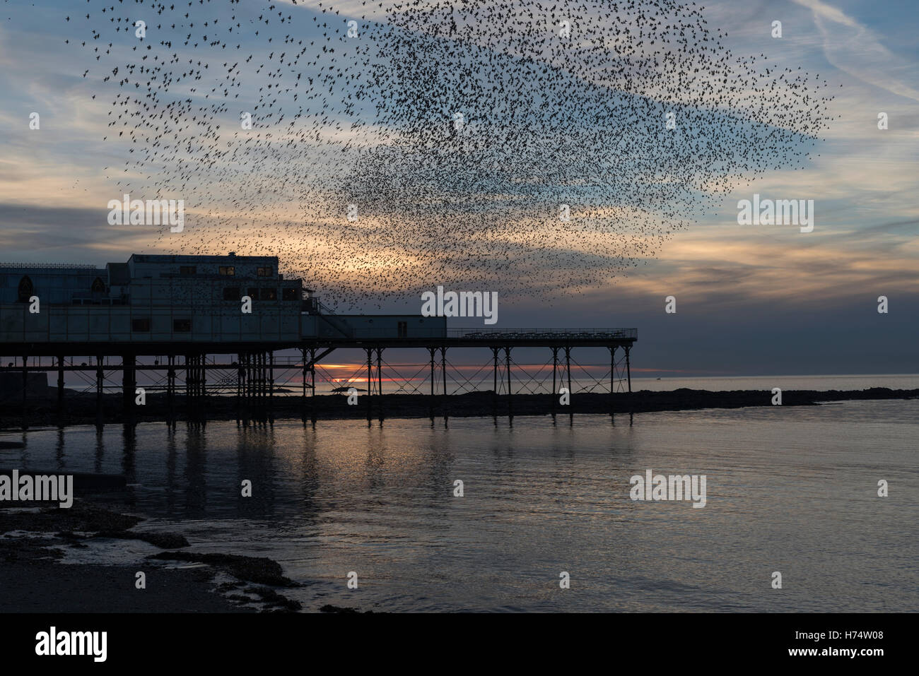 A murmuration of starlings flock over Aberystwyth's Victorian Pier dating back to 1865. - Stock Image