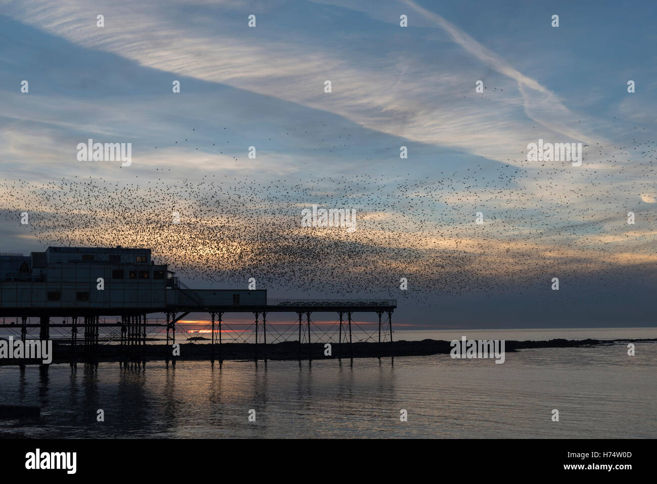 A murmuration of starlings flock over Aberystwyth's Victorian Pier dating back to 1865. Stock Photo