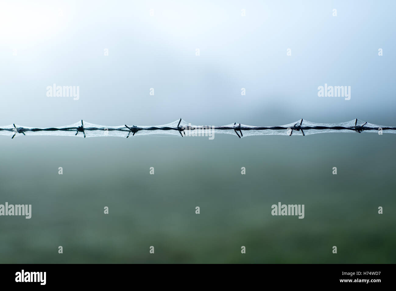 Straight Wire Stock Photos & Straight Wire Stock Images - Alamy