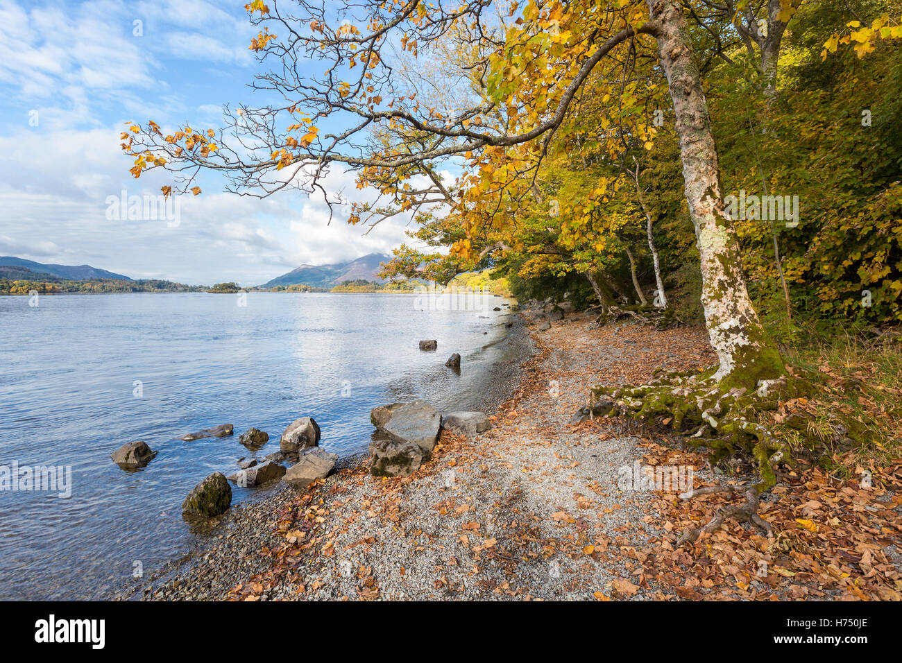 Autumnal Trees on the Shore of Derwent Water, a popular tourist destination in the English Lake District. - Stock Image