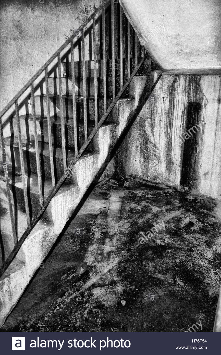 Mold growing in a stairwell in Toronto, Canada. - Stock Image