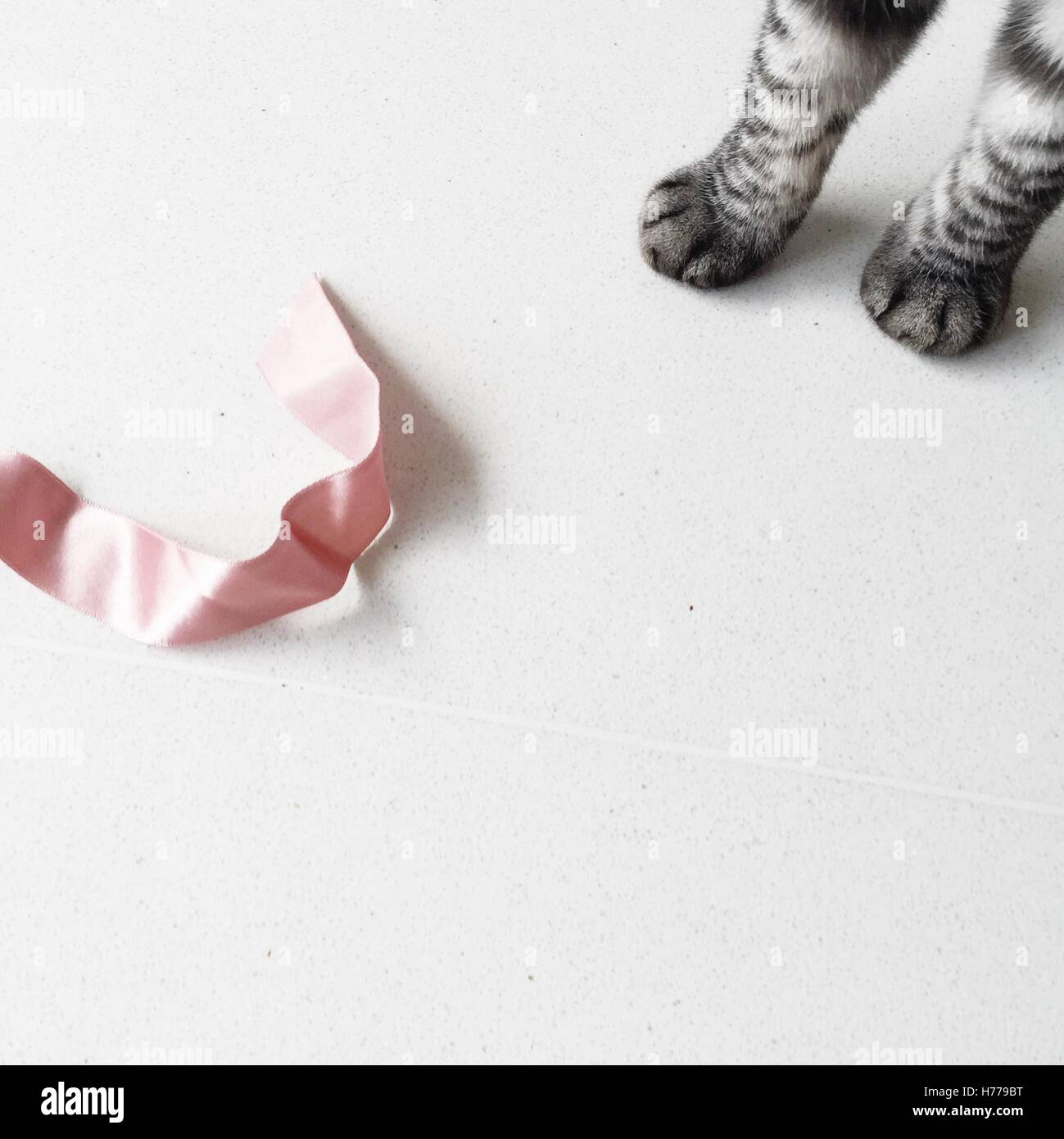 Cat's paws and a ribbon Stock Photo