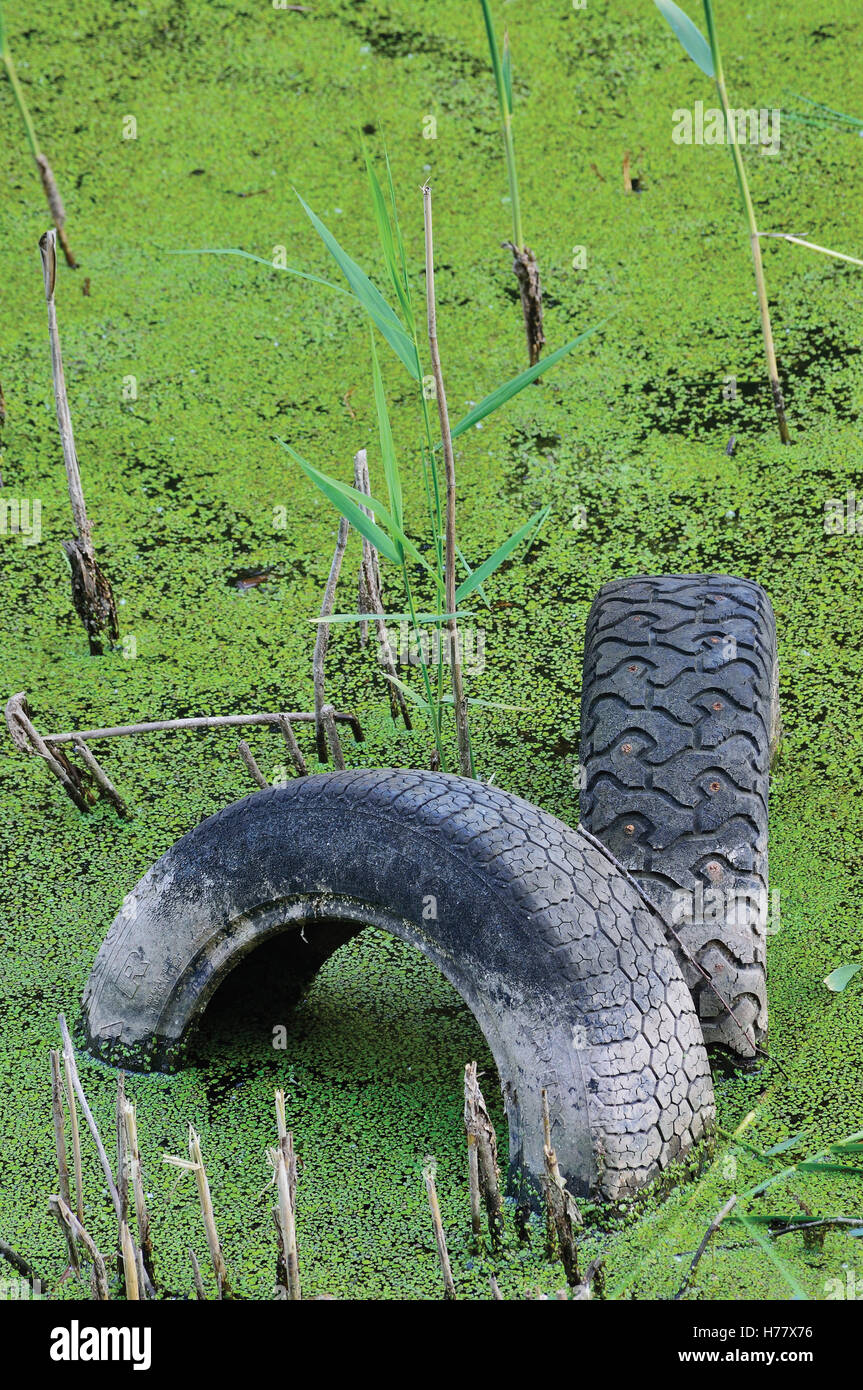 Discarded old tyres contaminated pond puddle water pollution concept vertical green sweet grass duckweed manna-grass - Stock Image