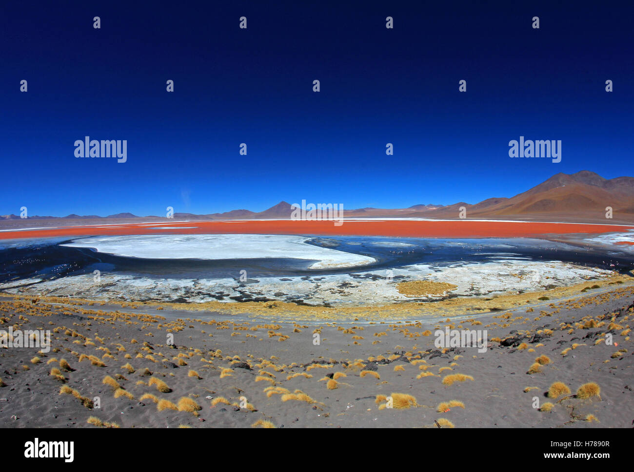 The nice red colored Laguna Colorada, fisheye prespective, southern Bolivia, South America - Stock Image