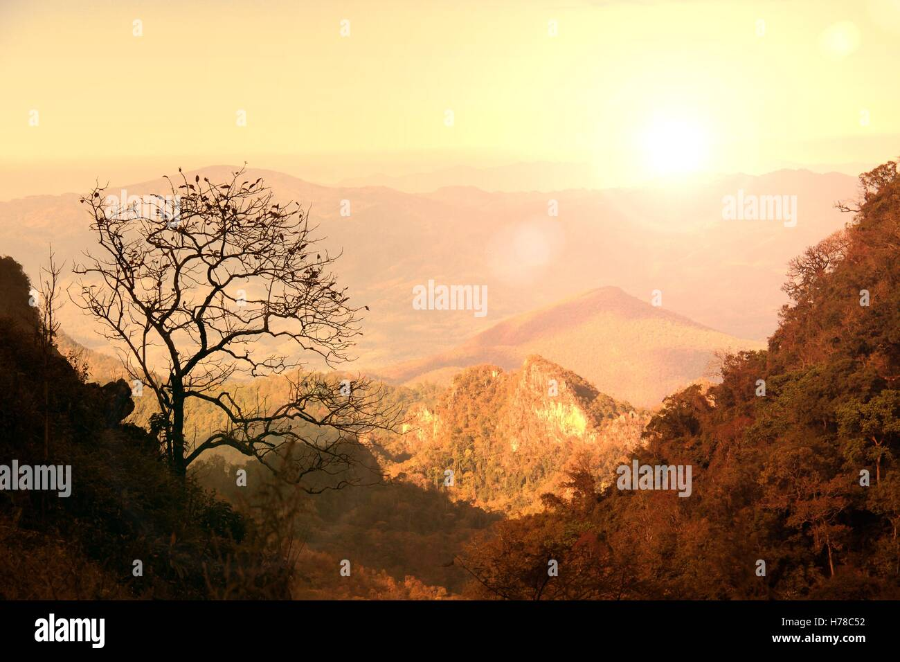 Leafless tree on limestone mountain during sunset with lens flare effect at Doi Luang Chiang Dao, Chiang mai, Thailand - Stock Image