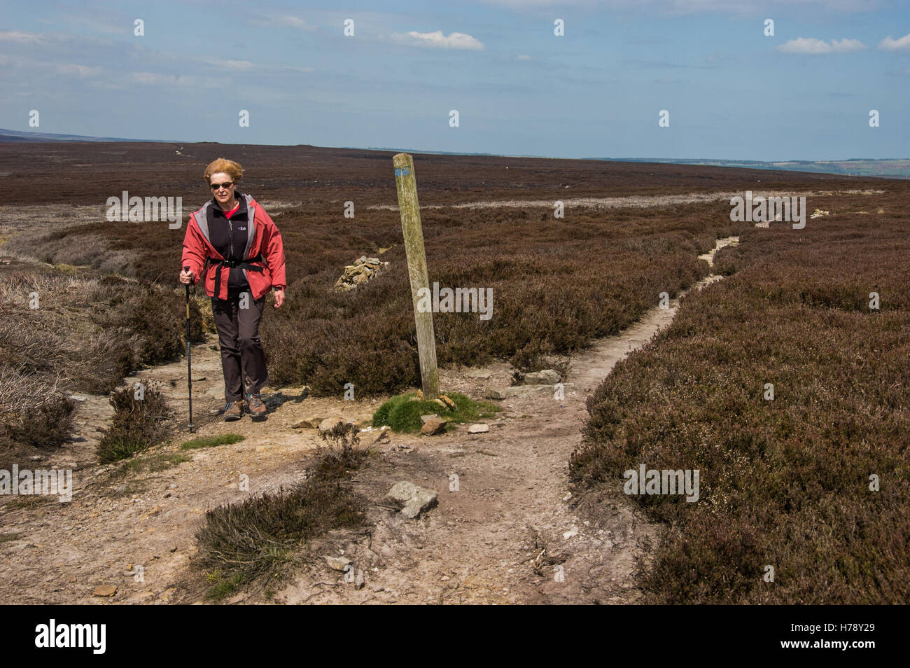 A walker on Two Howes Rigg above Goathland in Yorkshire - Stock Image