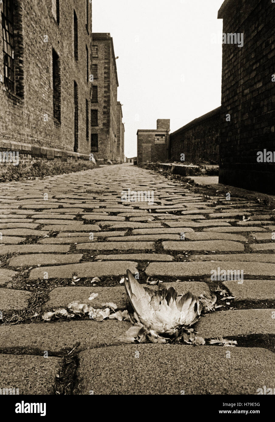 Cobbled road at the rear of warehouses in the Albert Dock, designed by Jesse Hartleyands opened in 1846. It was - Stock Image